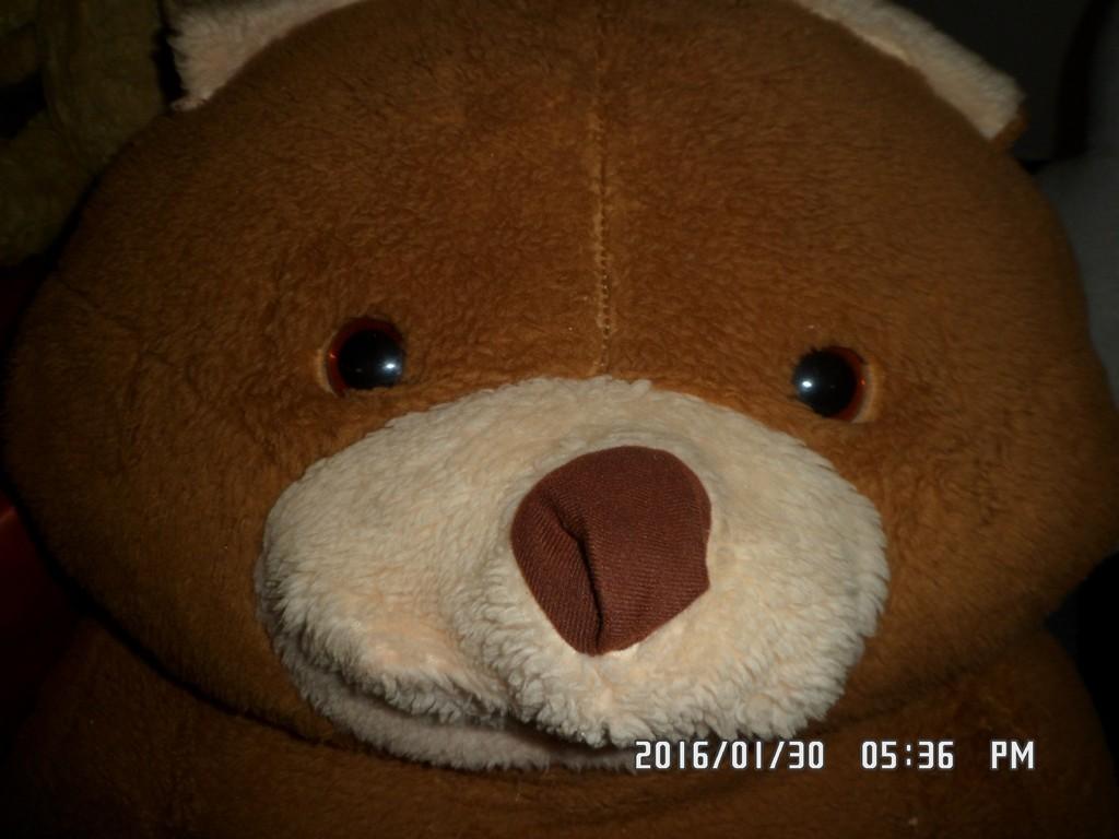medve nap2016_36